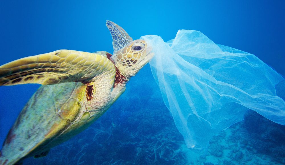 Sustainability: Bin the bag